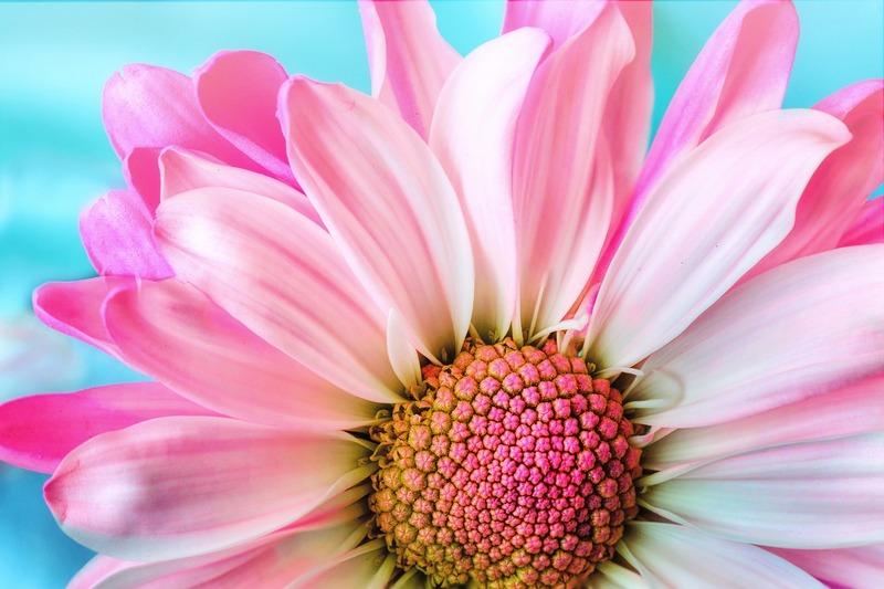 Сохранение цветов