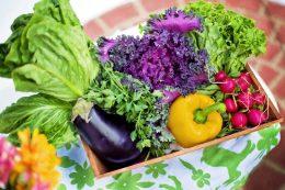 Как получить большой урожай на маленьком участке. Секреты выращивания хорошего урожая