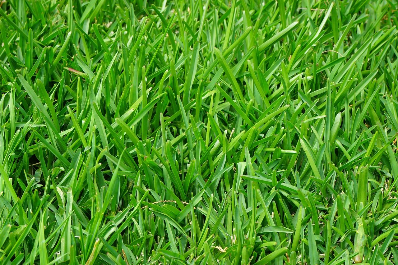 Какой у вас газон?