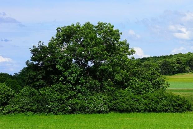 Где купить лиственное дерево и что стоит учесть?
