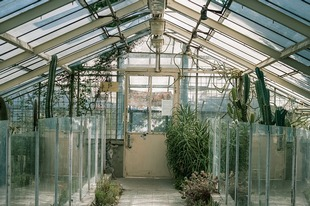 Создание теплиц или как обезопасить растения от погодных факторов