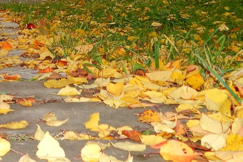 Что делать с опавшей листвой