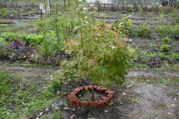 Готовим садовые растения к зиме