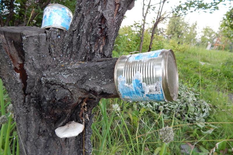 Как избавиться от пней на даче?