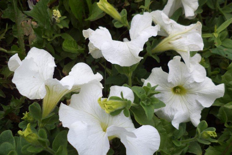 Можно ли сохранить летние цветы зимой у себя дома?