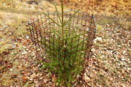 Как подготовить хвойные растения к зиме