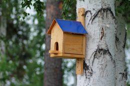 Скворечник на даче. Как грамотно сделать домик для птиц