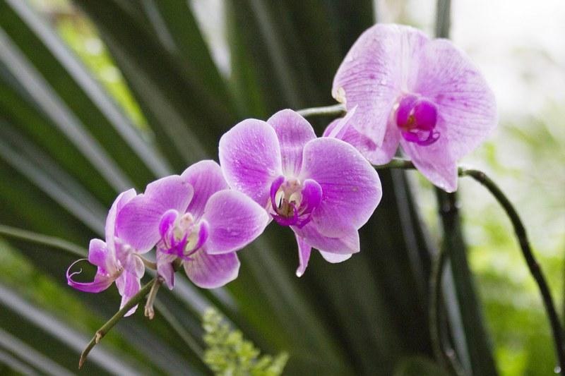 Орхидея фото