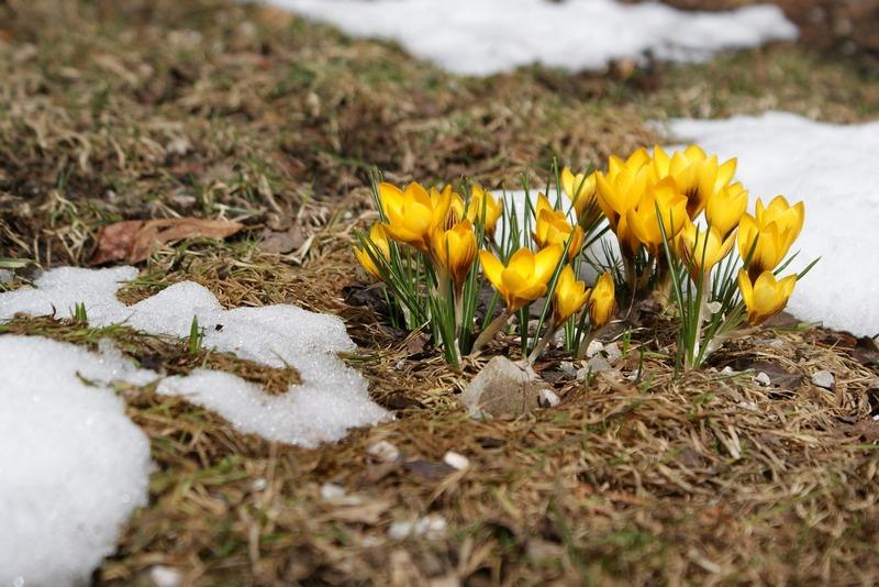 Что не нужно делать в саду весной