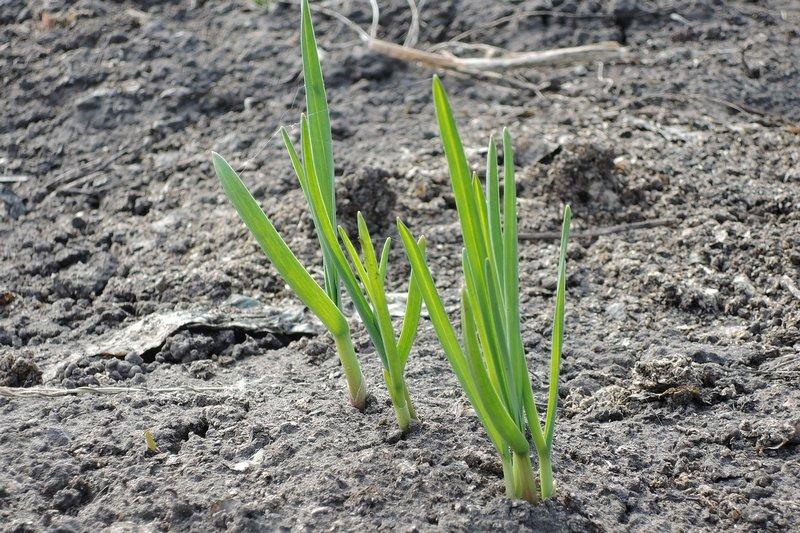 Секреты весеннего огорода: грунт