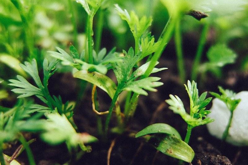 Секреты весеннего огорода: посадка