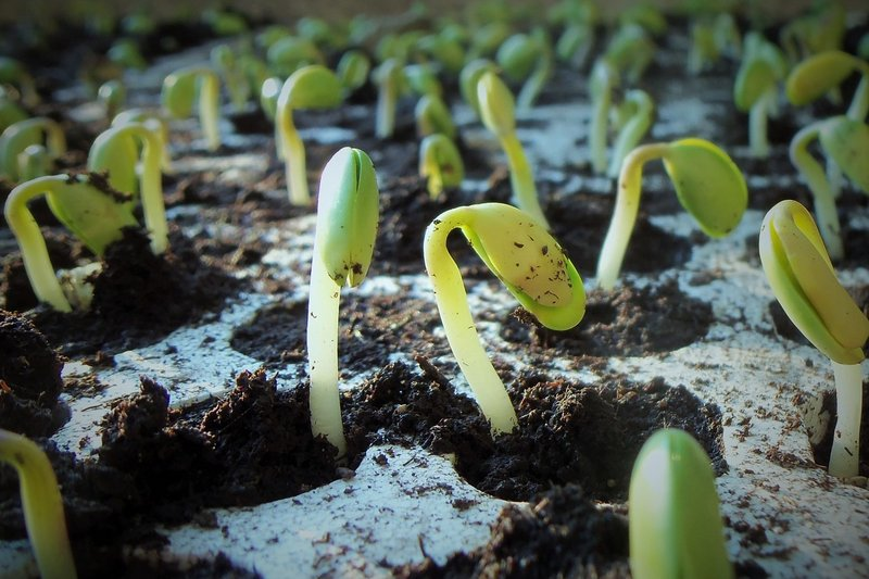 Огородные заметки весной: подготовка