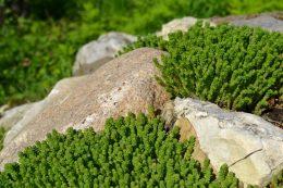 Ландшафтное озеленение на дачном участке
