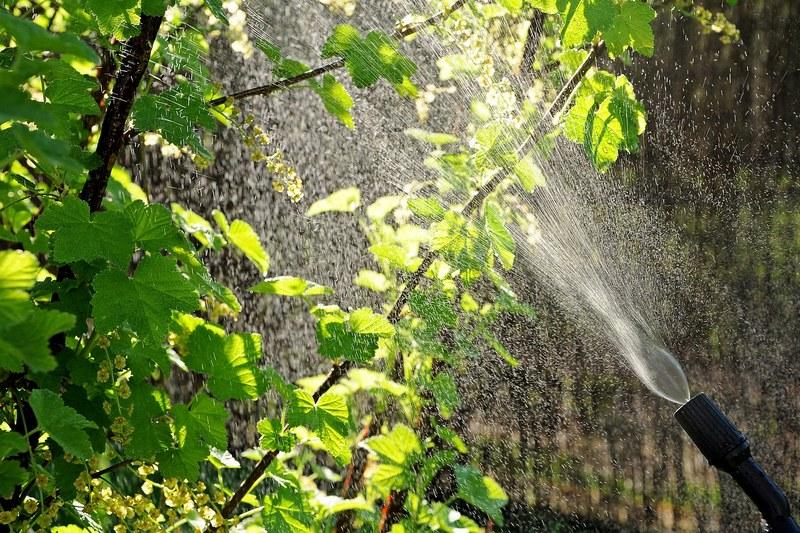 Современные пестициды для эффективной защиты растений