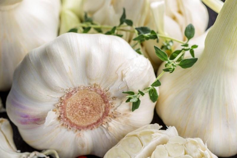 Рецепты использования чеснока от вредителей и болезней
