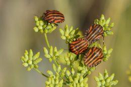 Порошок от насекомых