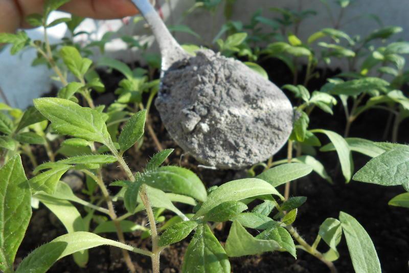 Необходимость микроудобрений в современном садоводстве