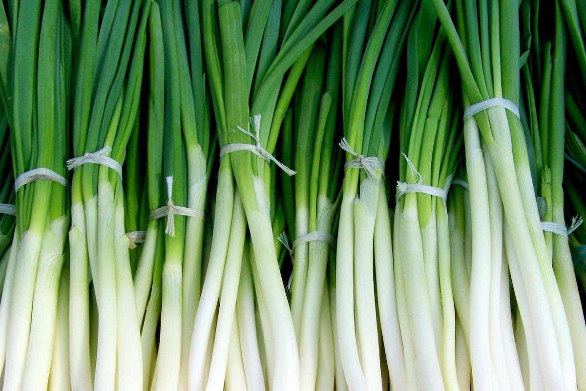 Пучковый лук. Выращивание
