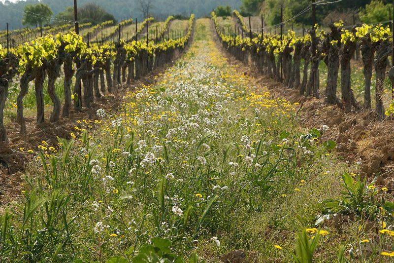 Гербициды - продуктивный способ избавления от сорной растительности