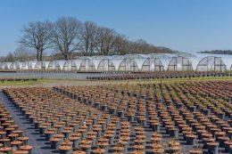 Саженцы плодовых деревьев – как выбрать