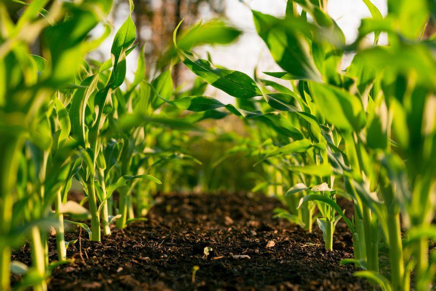 Агрохимия на приусадебном участке
